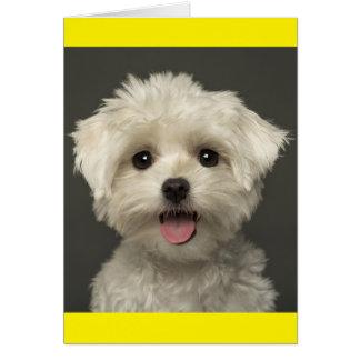 Cartão de nota maltês branco do vazio do cão de