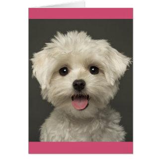 Cartão de nota maltês do vazio do cão de filhote