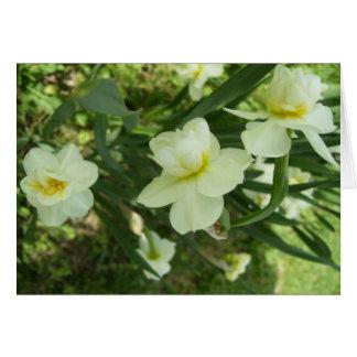 Cartão de nota - Narciss de florescência dobro