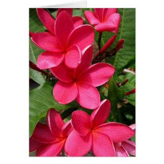 cartão de nota - plumerias cor-de-rosa