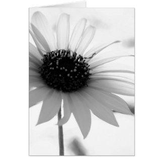 Cartão de nota transparente da flor de BW