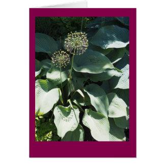 Cartão de nota vazio das folhas do Allium e do