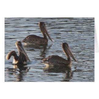 Cartão de nota vazio--Pelicanos