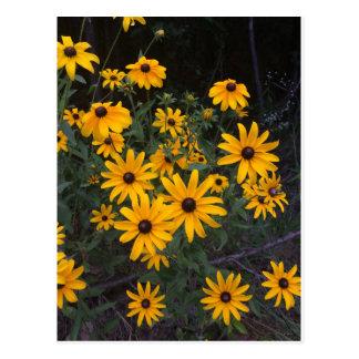 Cartão de olhos pretos de Susans do Wildflower de