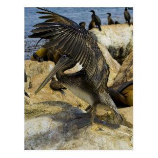Cartão de ondulação do pelicano