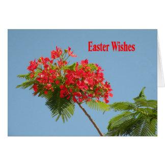 Cartão de páscoa com a flor real de Poinciana