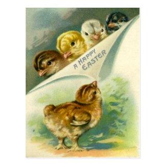 Cartão Postal Cartão de páscoa dos pintinhos da páscoa do