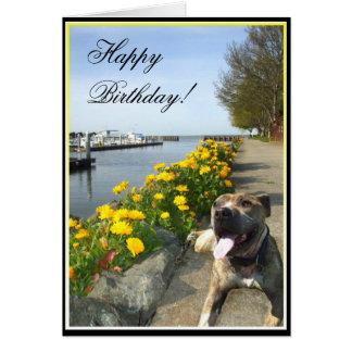 Cartão de Pitbull do feliz aniversario