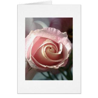Cartão de rosa rosa