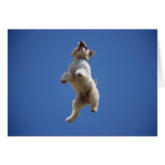 Cartão de salto de Goldendoodle