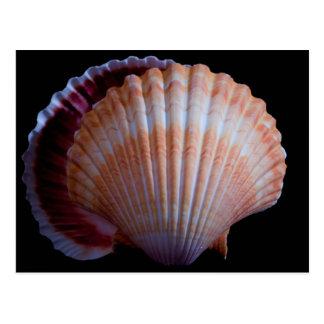 Cartão de Shell de Scallop