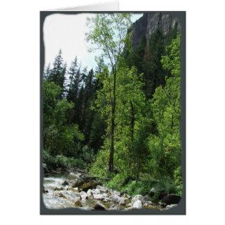 Cartão de simpatia calmo da floresta