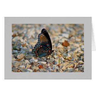 Cartão de simpatia da borboleta