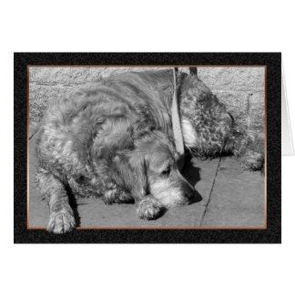 Cartão de simpatia do cão de estimação