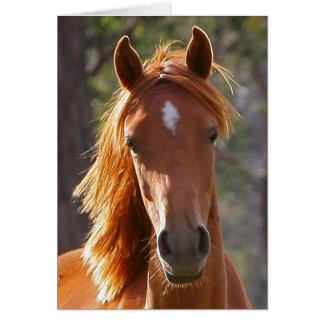 Cartão de simpatia do cavalo
