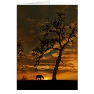 Cartão de simpatia eqüino do cavalo e do por do