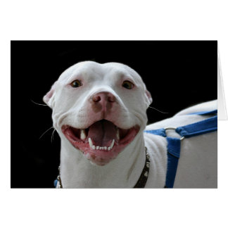 Cartão de sorriso do pitbull