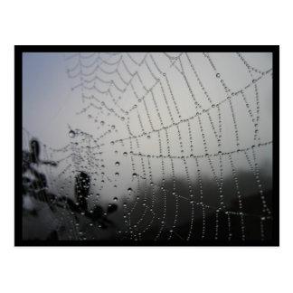 Cartão de Spiderweb