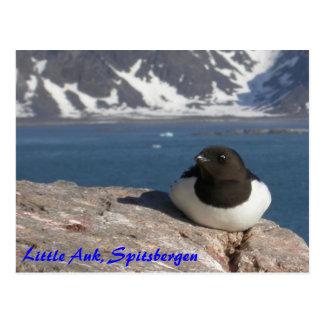 Cartão de Spitsbergen do Auk pequeno