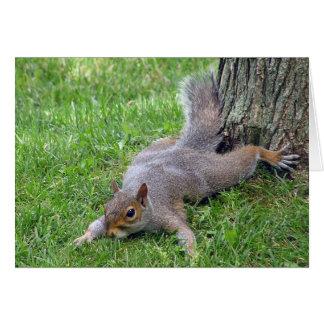 Cartão de Splat do esquilo