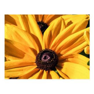 Cartão de Susan de olhos pretos