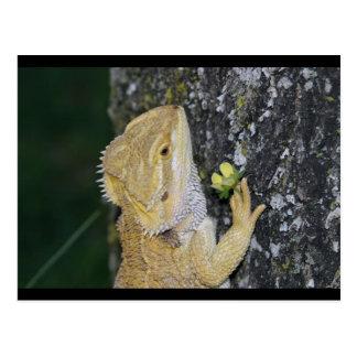 Cartão de Tenchi (dragão farpado)