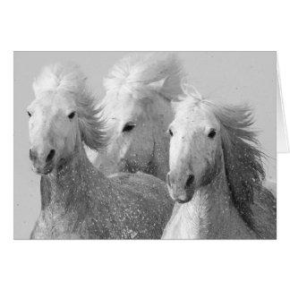 Cartão de três cavalos brancos