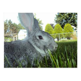 Cartão de um coelho bonito