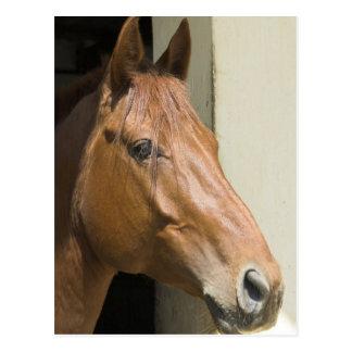 Cartão de um quarto americano do cavalo