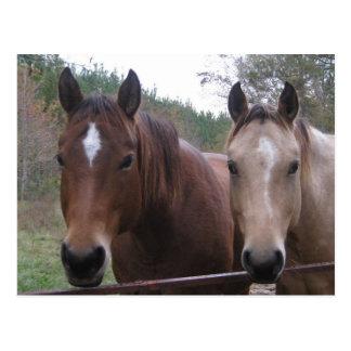 Cartão de um quarto do cavalo