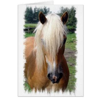 Cartão de um quarto do cavalo do Palomino