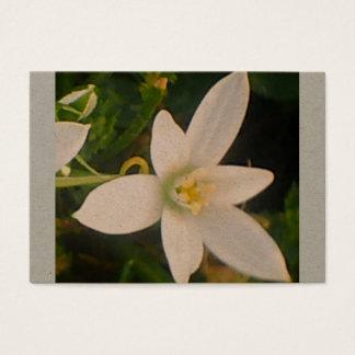 Cartão de visita branco da flor do primavera