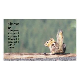 Cartão de visita da foto do esquilo à terra