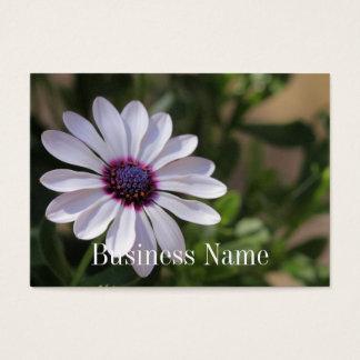 Cartão de visita de Osteospermum