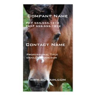 Cartão de visita do cavalo de Paso Fino