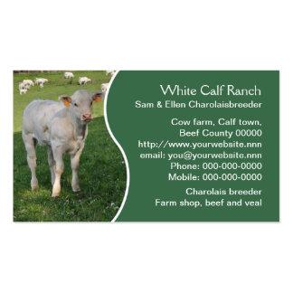 Cartão de visita dos gados bovinos do charolês