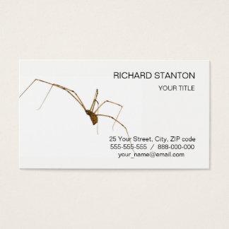 Cartão De Visitas Aranha