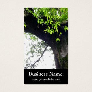 Cartão De Visitas Árvore l ainda natureza l fotografia