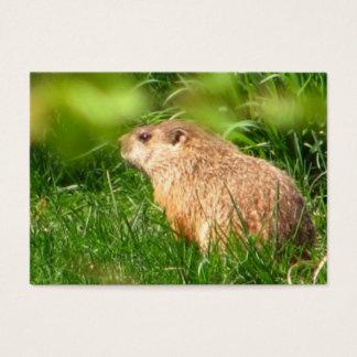 Cartão De Visitas ATC do ~ da marmota