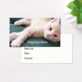 Cartão De Visitas Gatinho no gato alaranjado amigável parvo do