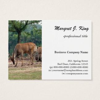 Cartão De Visitas Gazela, jardim zoológico do animal selvagem, 羚.