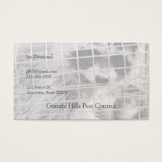 Cartão De Visitas Guaxinim em uma armadilha