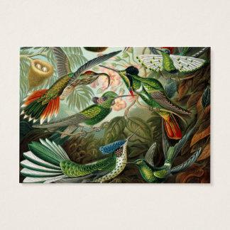 Cartão De Visitas Ilustração científica dos colibris do vintage