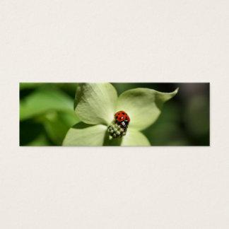 Cartão De Visitas Mini Joaninha marcador da foto da flor do Dogwood no