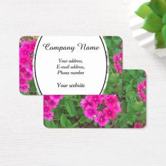 Cartão De Visitas O verbena cor-de-rosa bonito floresce a foto