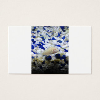 Cartão De Visitas Peixes seixos e do gato azuis e brancos do albino