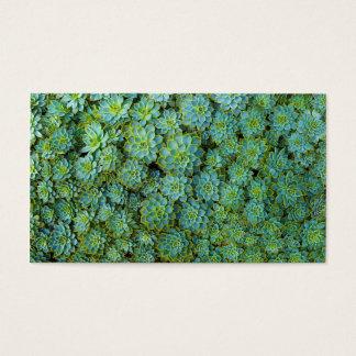 Cartão De Visitas Plantas verdes de Echeveria dos Succulents