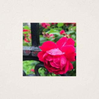 Cartão De Visitas Quadrado Foto da porta de jardim do orvalho dos pingos de