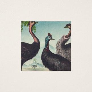 Cartão De Visitas Quadrado Trio das avestruzes