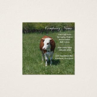 Cartão De Visitas Quadrado Vaca no pasto